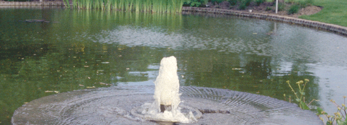 Tuinaanleg molensteen bron vijver