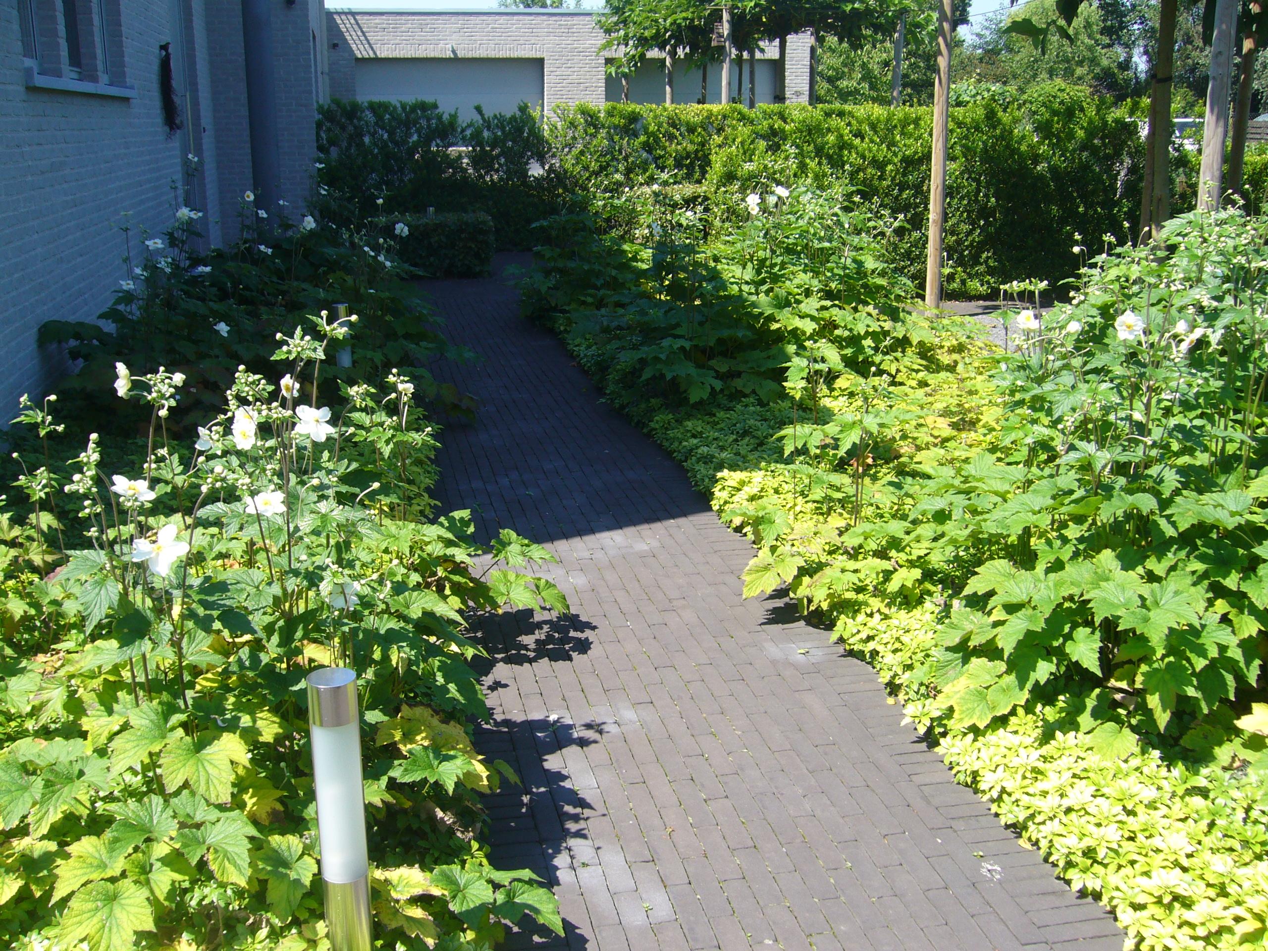 tuinbeplanting tuinpad